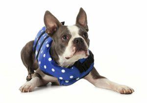 Boston Terrier Swim Vest
