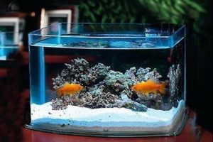 water care for golfish