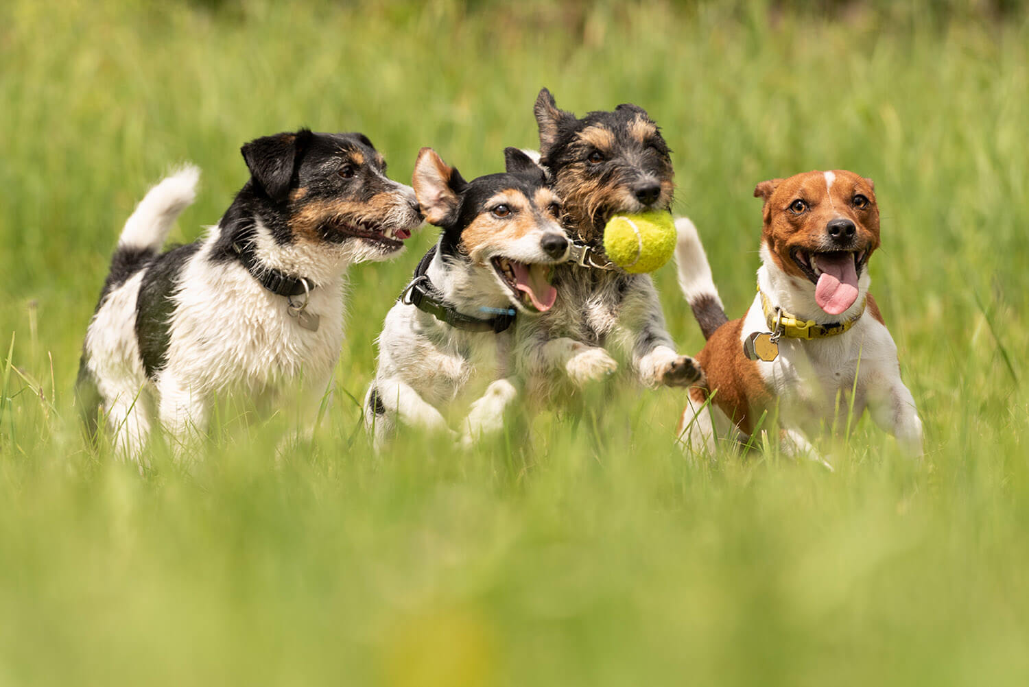 The friendliest dog breeds for families