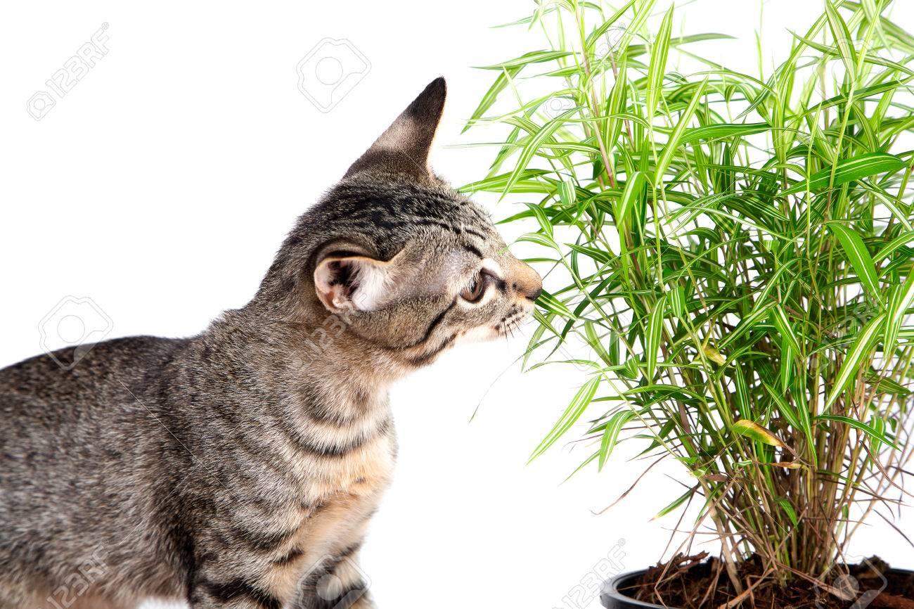 Cat eat green grass