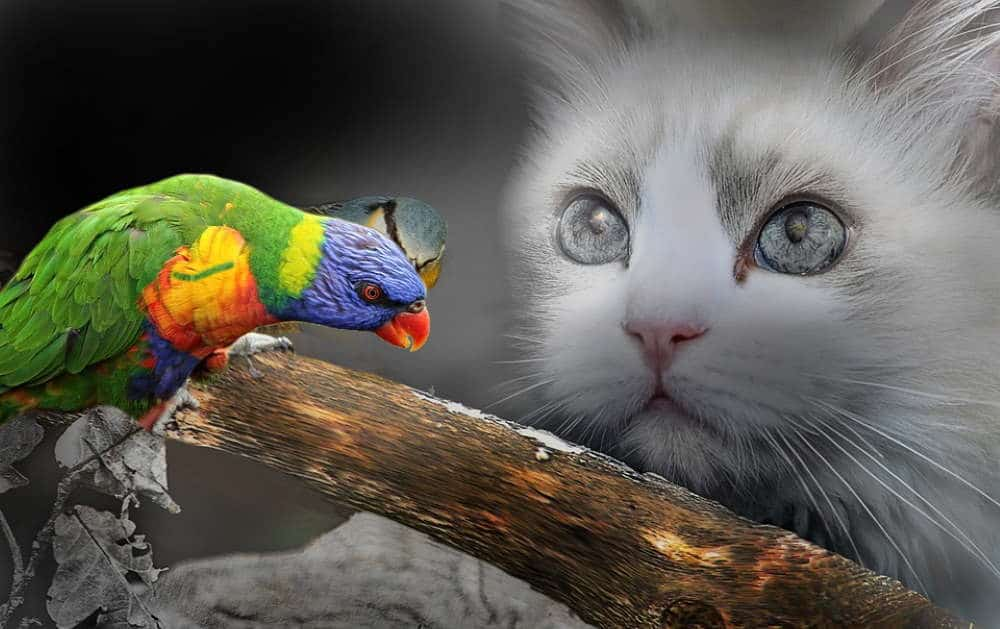 friendly parrot and cat
