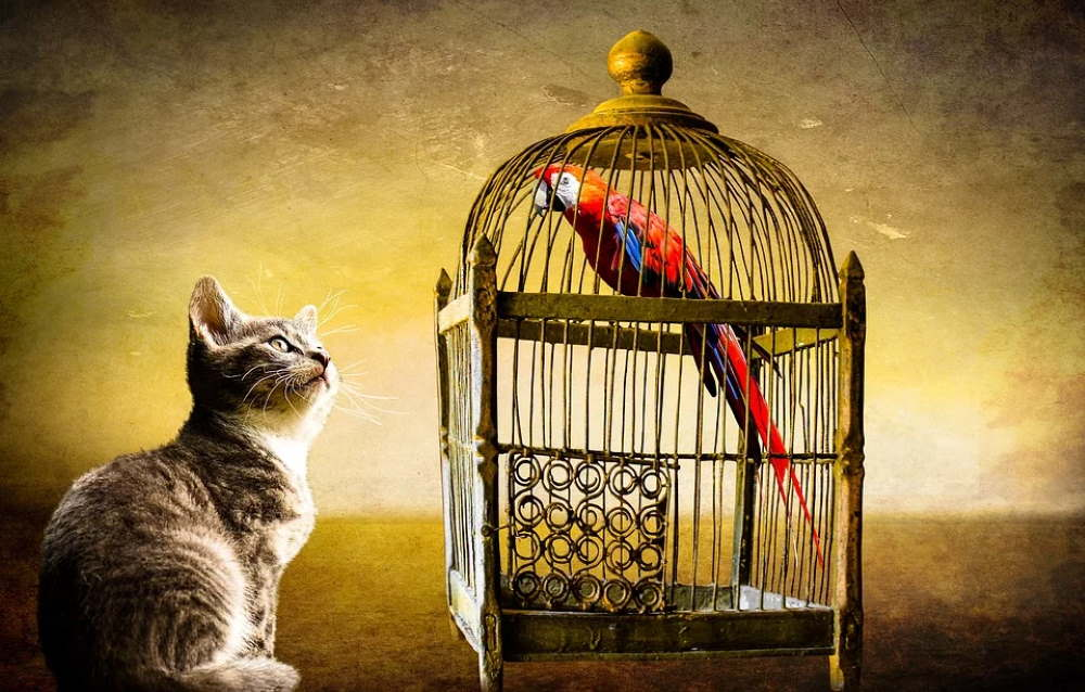 Cat and bird