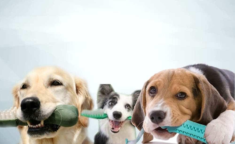dogs dental health