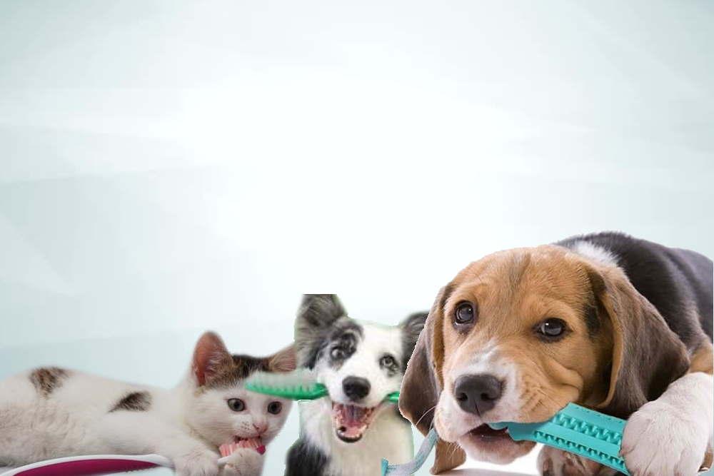 Dental health for pets