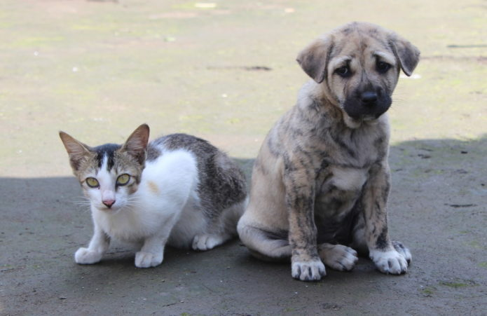 dog and cat as friend